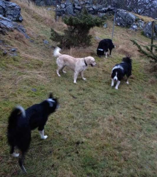 fire-hunder
